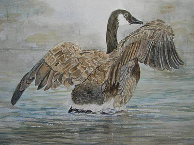Canadian Geese Painting - Canada Goose 3 by Betty Mulligan