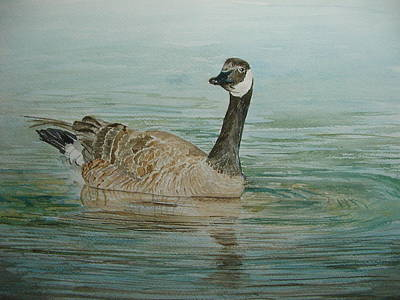 Canadian Geese Painting - Canada Goose by Betty Mulligan
