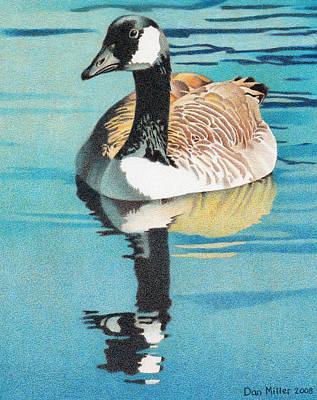 Canada Goose Art Print by Dan Miller