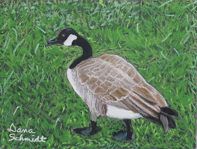 Painting - Canada Goose In Golden Gate Arboretum by Dana Schmidt
