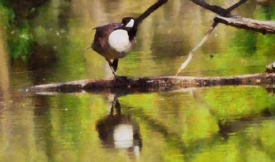 Goose Mixed Media - Canada Goose Reflection by Dan Sproul