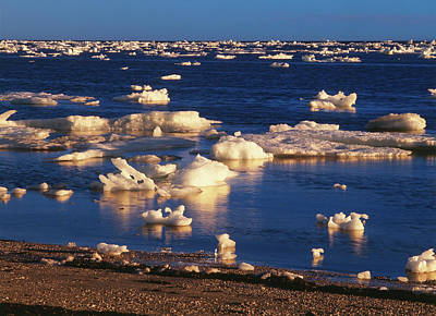 Ice-floe Photograph - Canada, Manitoba, Churchill, Ice Floe by Jaynes Gallery