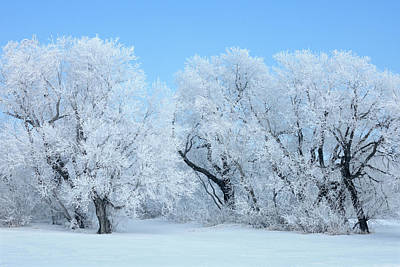 Hoarfrost Photograph - Canada, Manitoba, Hazelridge by Jaynes Gallery
