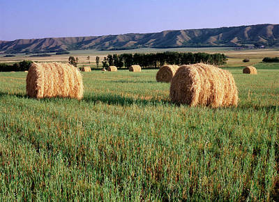 Bale Photograph - Canada, Manitoba, Rolled Hay Bales by Jaynes Gallery