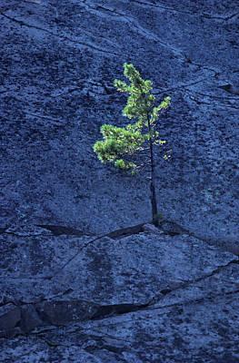 Georgian Bay Wall Art - Photograph - Canada, Ontario Pine Tree Growing by Jaynes Gallery