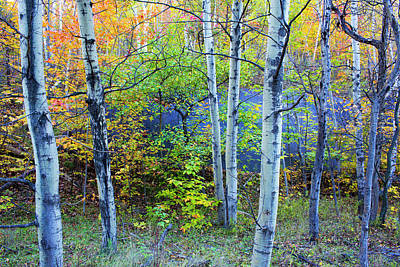 Quebec Photograph - Canada, Quebec, Mount St by Jaynes Gallery