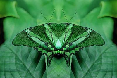 Canada, Victoria, Victoria Butterfly Art Print by Jaynes Gallery