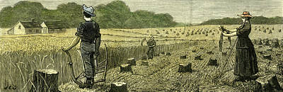 Canada Wheat Harvest In New Land 1880 Art Print