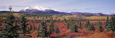 Canada, Yukon Territory, View Of Pines Art Print by Panoramic Images