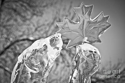 Photograph - Canadian by Cheryl Baxter