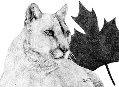 Canadian Cougar Art Print by Kayleigh Semeniuk