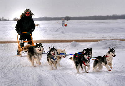 Print featuring the photograph Canadian Dogsled Team by Larry Trupp