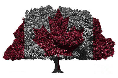 Flag Digital Art - Canadian Flag On Isolated Tree by Image World