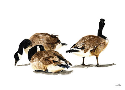 Canadian Geese Painting - Canadian Geese by Carlo Ghirardelli