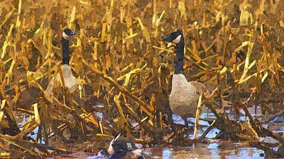 Canadian Geese Drawing - Canadian Geese Corn Field  by Rosemarie E Seppala