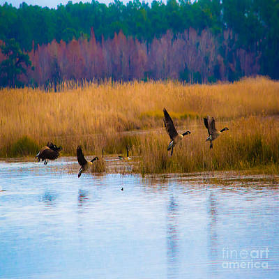 Photograph - Canadian Geese - Duvet Cover Sized by Scott Hervieux