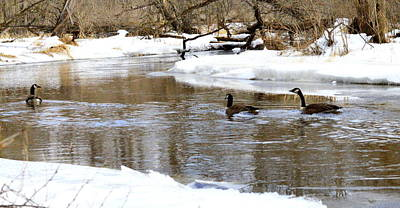 Wildlife Photograph - Canadian Geese In Winter by Megan Luschen