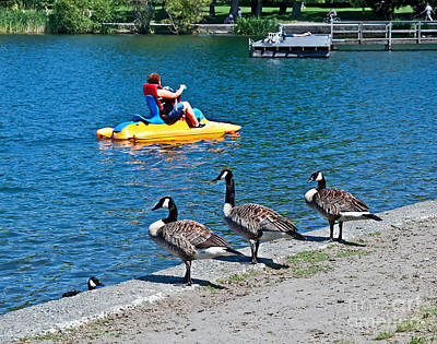 Photograph - Canadian Geese Near Summer Paddle Boat Fun by Valerie Garner