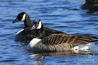 Photograph - Canadian Geese Pair  by Neal Eslinger