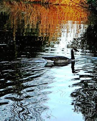 Photograph - Canadian Goose At Burden  by Lizi Beard-Ward
