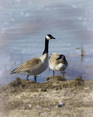 Appleton Photograph - Canadian Goose Dream by Carol Toepke