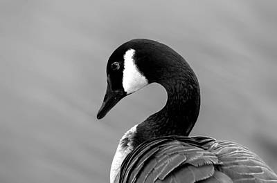 Art Print featuring the photograph Canadian Goose In Black And White by Frank Bright