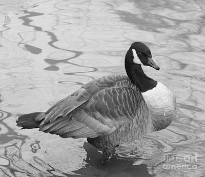 Photograph - Canadian Goose In Black And White by John Telfer
