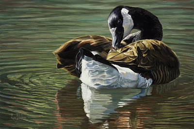 Goose Wall Art - Painting - Canadian Goose by Lucie Bilodeau