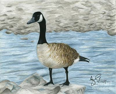 Canadian Geese Drawing - Canadian Goose by Troy Argenbright