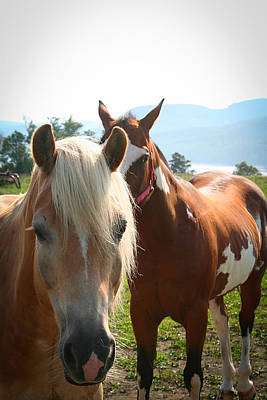 Photograph - Canadian Horses by Kathryn McBride