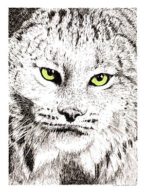 Canadian Lynx Drawing - Canadian Lynx by Paul Kmiotek
