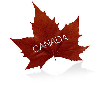 Sports Royalty-Free and Rights-Managed Images - Canadian Maple Leaf by Aged Pixel