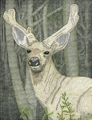 Mule Deer Drawing - Canadian Mule Deer by Calvert Koerber