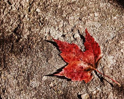 Fall Photograph - Canadian Shield by Chris McPhee