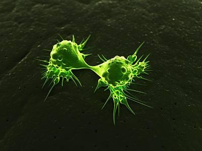 Cancer Cells Dividing, Artwork Art Print by Sciepro