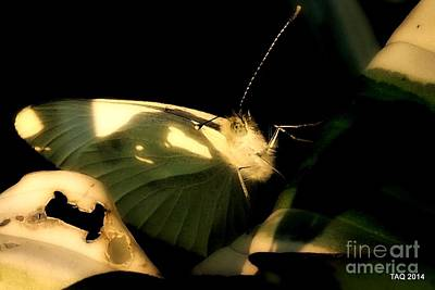 Photograph - Candle On Wings by Tami Quigley