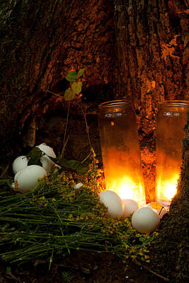 Photograph - Candles Eggs And Ragwort Discovered At The Base Of A Tree Beside A Small Sinkhole by Daniel Reed