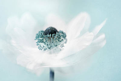 Teal Wall Art - Photograph - Candy Floss by Jacky Parker