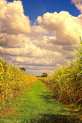 Digital Art - Cane Fields by Wallaroo Images