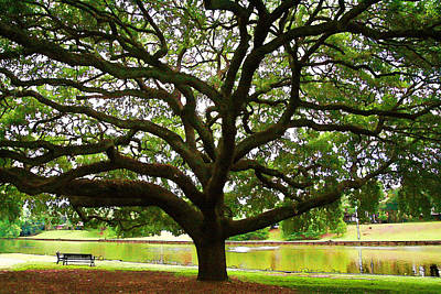 Photograph - Cane River Oak by Audreen Gieger