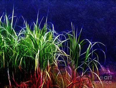 Photograph - Canefield by Judi Bagwell