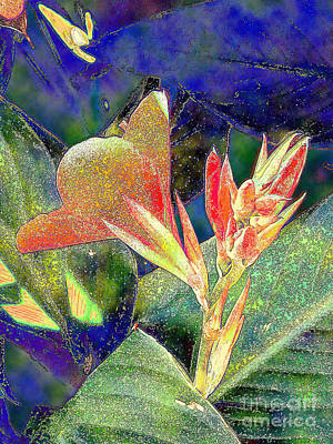 Canna Photograph - Canna 1 by Diane DiMarco
