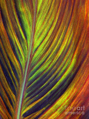 Photograph - Canna Leaf by Living Color Photography Lorraine Lynch