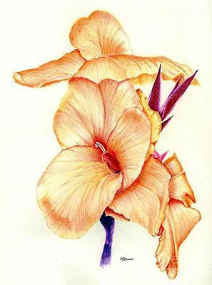 Lillies Drawing - Canna Lilly by Pamela Cawood