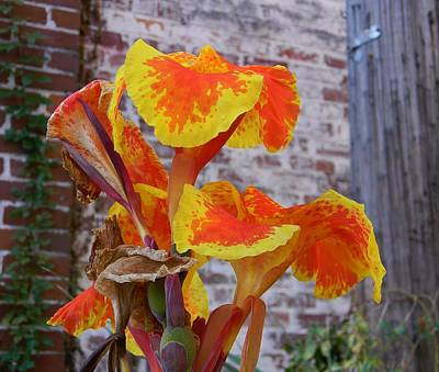 Canna Lily And Background Art Print by Warren Thompson