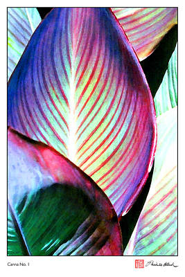 Canna Digital Art - Canna No. 1 by Michelle Bush