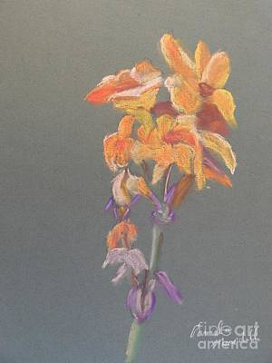 Canna Painting - Canna by Pamela  Meredith