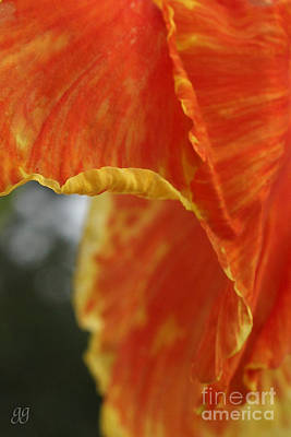 Photograph - Canna Vertical by Geri Glavis
