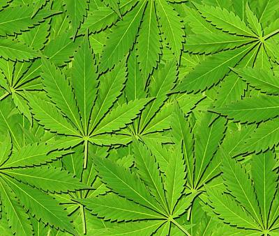 Narcotic Photograph - Cannabis Leaves by Victor De Schwanberg