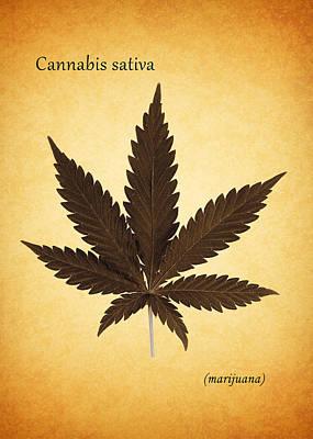 Marijuana Photograph - Cannabis Sativa by Mark Rogan